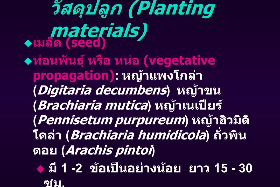 วัสดุปลูก (Planting materials)