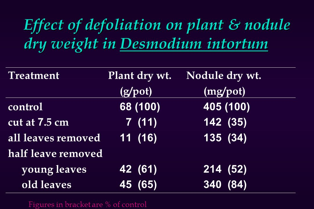 Effect of defoliation on plant & nodule dry weight in Desmodium intortum