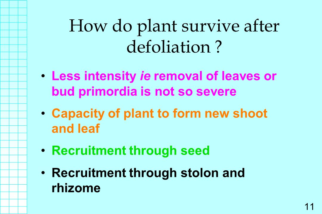How do plant survive after defoliation