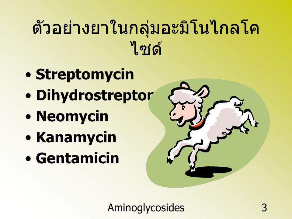 ตัวอย่างยาในกลุ่มอะมิโนไกลโคไซด์