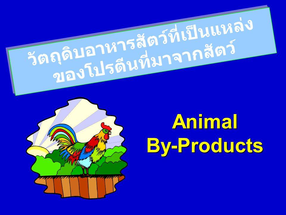 วัตถุดิบอาหารสัตว์ที่เป็นแหล่งของโปรตีนที่มาจากสัตว์