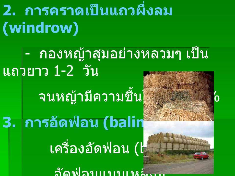 2. การคราดเป็นแถวผึ่งลม (windrow)