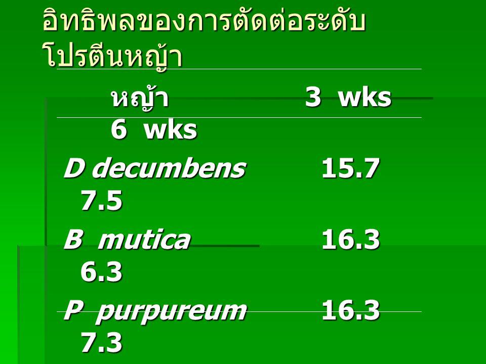 อิทธิพลของการตัดต่อระดับโปรตีนหญ้า