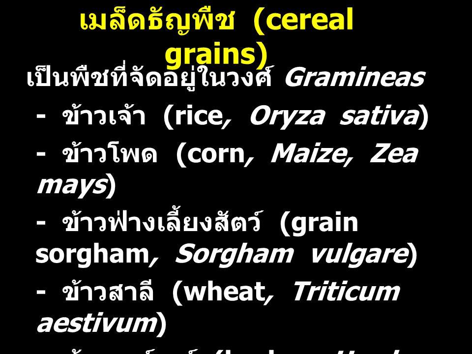 เมล็ดธัญพืช (cereal grains)