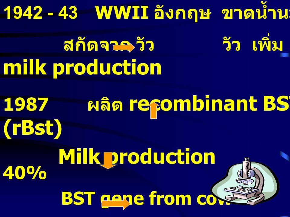 1942 - 43 WWII อังกฤษ ขาดน้ำนม สกัดจาก วัว วัว เพิ่ม milk production. 1987 ผลิต recombinant BST (rBst)