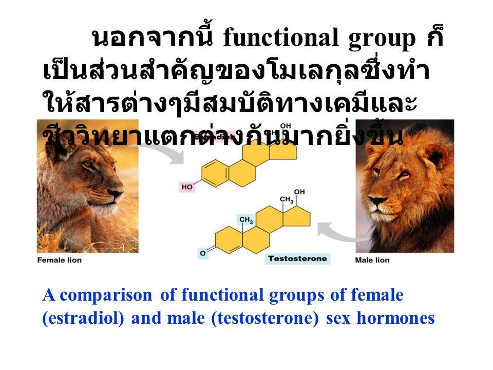 นอกจากนี้ functional group ก็เป็นส่วนสำคัญของโมเลกุลซึ่งทำให้สารต่างๆมีสมบัติทางเคมีและชีววิทยาแตกต่างกันมากยิ่งขึ้น