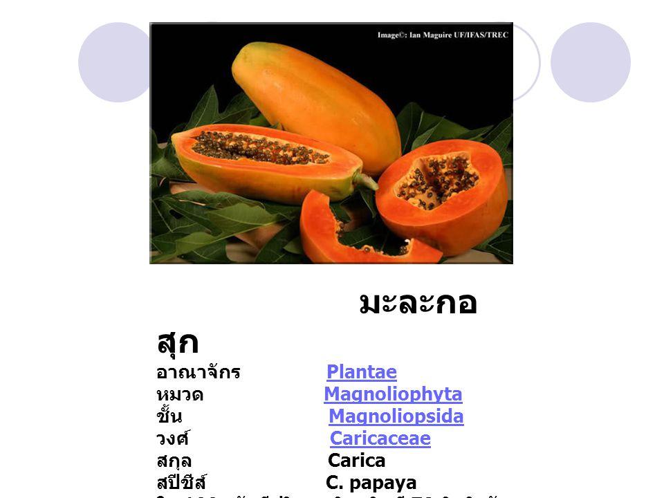 มะละกอสุก อาณาจักร Plantae หมวด Magnoliophyta ชั้น Magnoliopsida