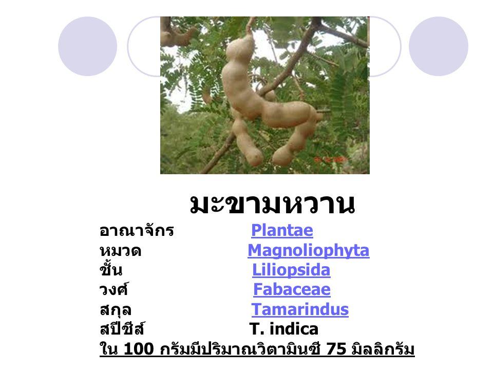 มะขามหวาน อาณาจักร Plantae หมวด Magnoliophyta ชั้น Liliopsida