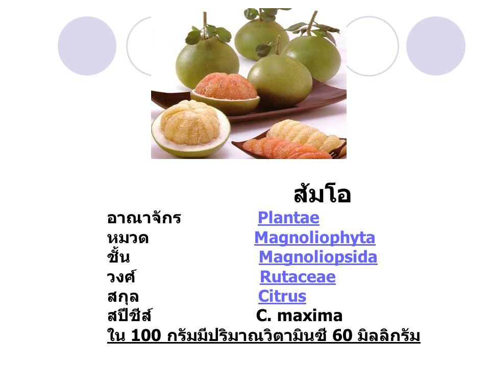 ส้มโอ อาณาจักร Plantae หมวด Magnoliophyta ชั้น Magnoliopsida