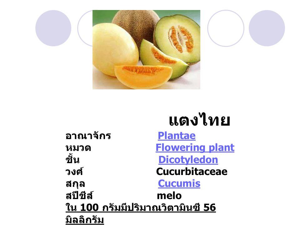 แตงไทย อาณาจักร Plantae หมวด Flowering plant ชั้น Dicotyledon