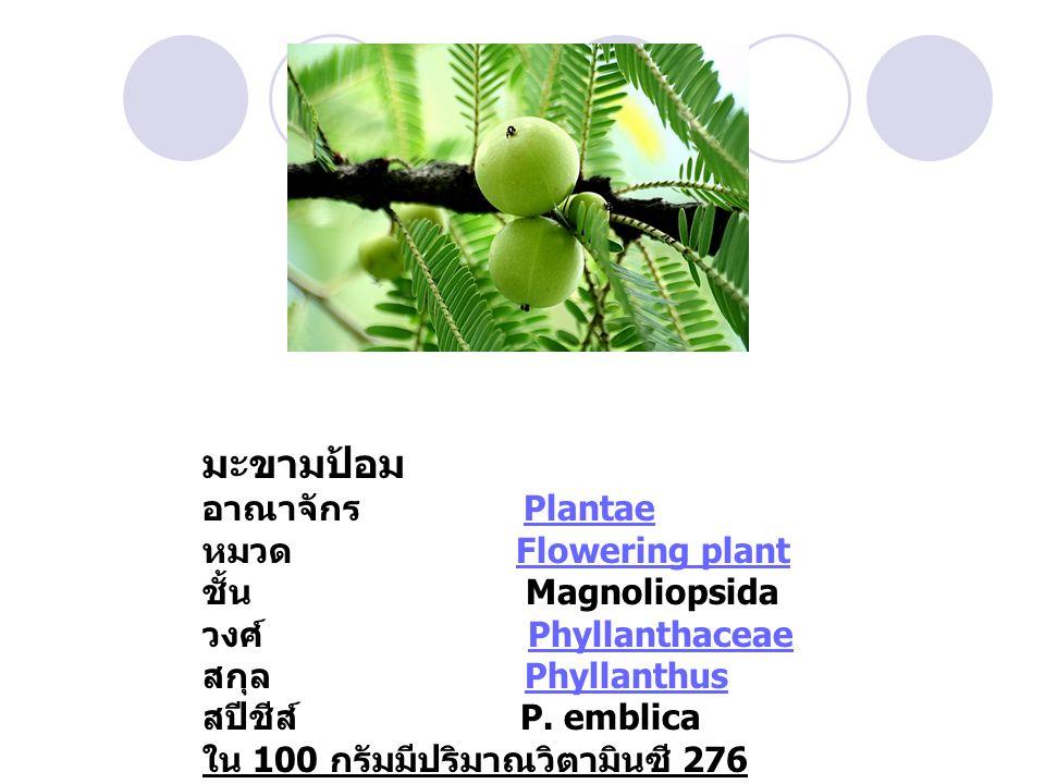 มะขามป้อม อาณาจักร Plantae หมวด Flowering plant ชั้น Magnoliopsida