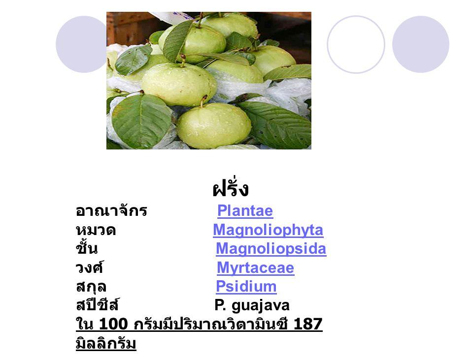 ฝรั่ง อาณาจักร Plantae หมวด Magnoliophyta ชั้น Magnoliopsida