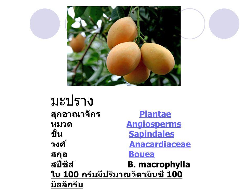 มะปราง สุกอาณาจักร Plantae หมวด Angiosperms ชั้น Sapindales