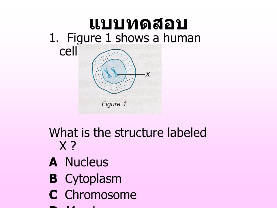 แบบทดสอบ 1. Figure 1 shows a human cell