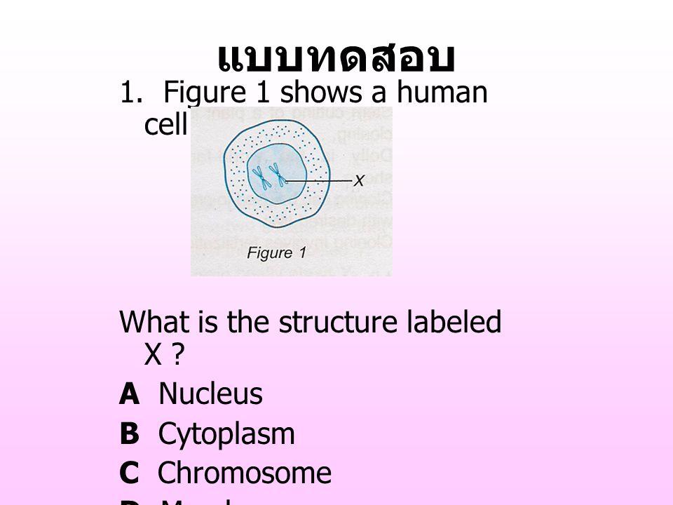 แบบทดสอบ 1. Figure 1 shows a human cell