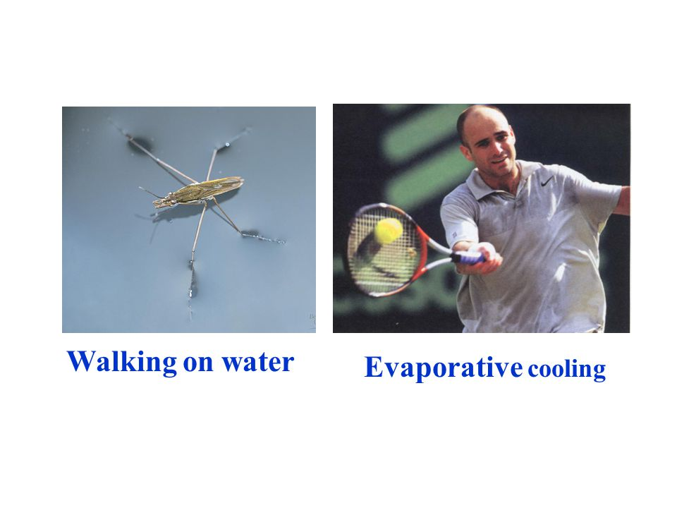 Walking on water Evaporative cooling