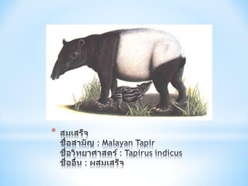 สมเสร็จ ชื่อสามัญ : Malayan Tapir ชื่อวิทยาศาสตร์ : Tapirus indicus ชื่ออื่น : ผสมเสร็จ