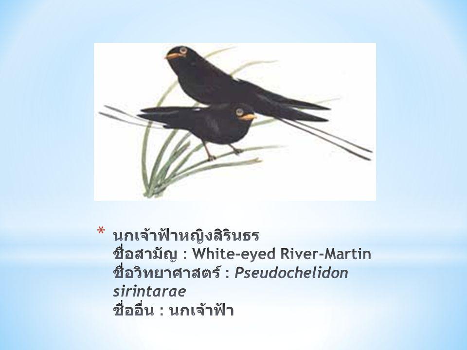 นกเจ้าฟ้าหญิงสิรินธร ชื่อสามัญ : White-eyed River-Martin ชื่อวิทยาศาสตร์ : Pseudochelidon sirintarae ชื่ออื่น : นกเจ้าฟ้า