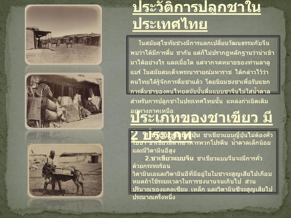 ประวัติการปลูกชาในประเทศไทย