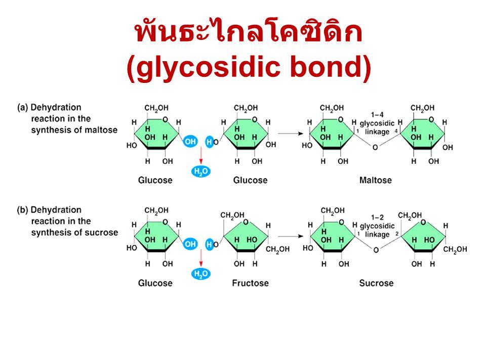 พันธะไกลโคซิดิก (glycosidic bond)