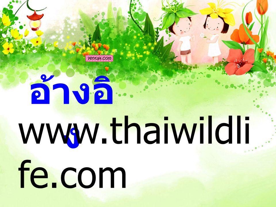 อ้างอิง www.thaiwildlife.com