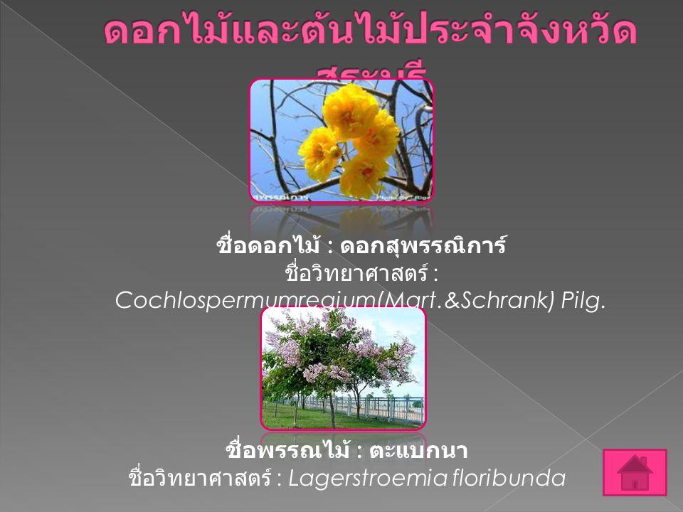 ดอกไม้และต้นไม้ประจำจังหวัดสระบุรี