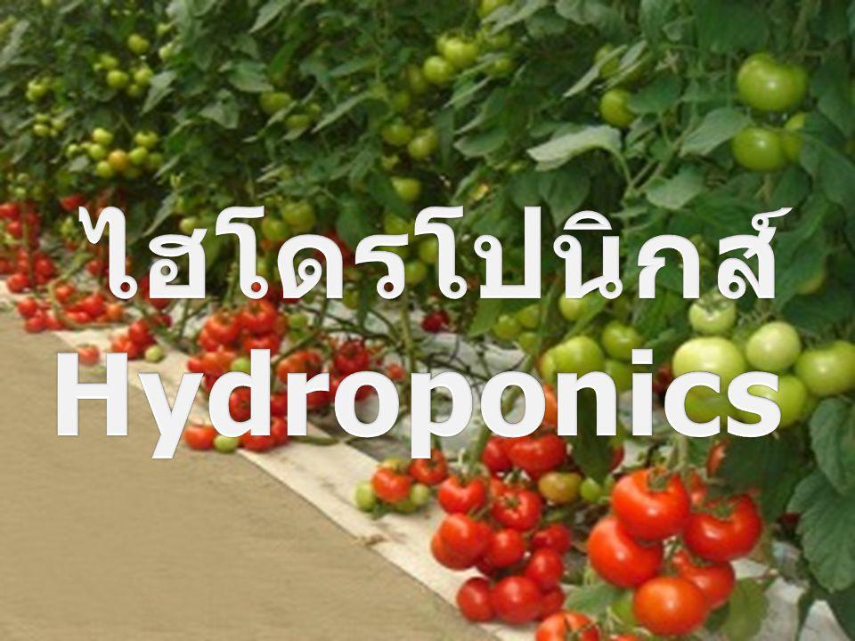 ไฮโดรโปนิกส์ Hydroponics