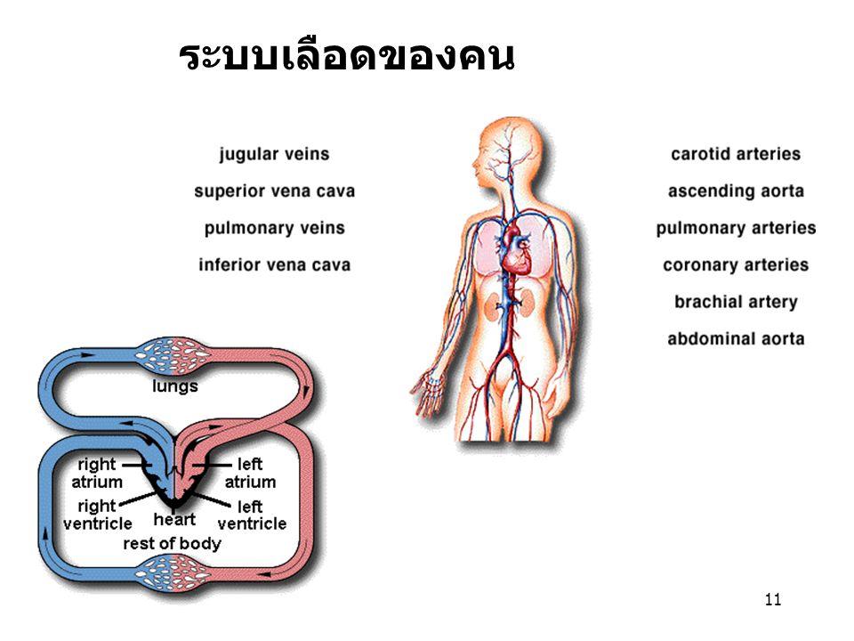 ระบบเลือดของคน