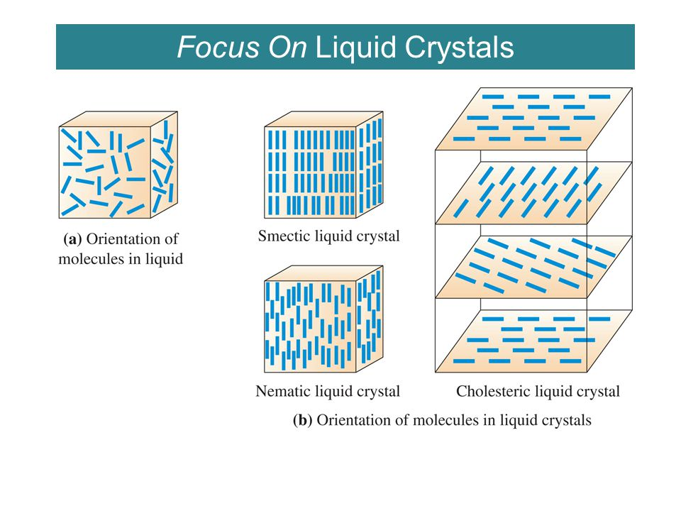 Focus On Liquid Crystals