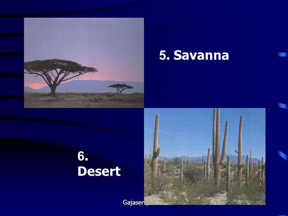 5. Savanna 6. Desert Gajaseni, 2001