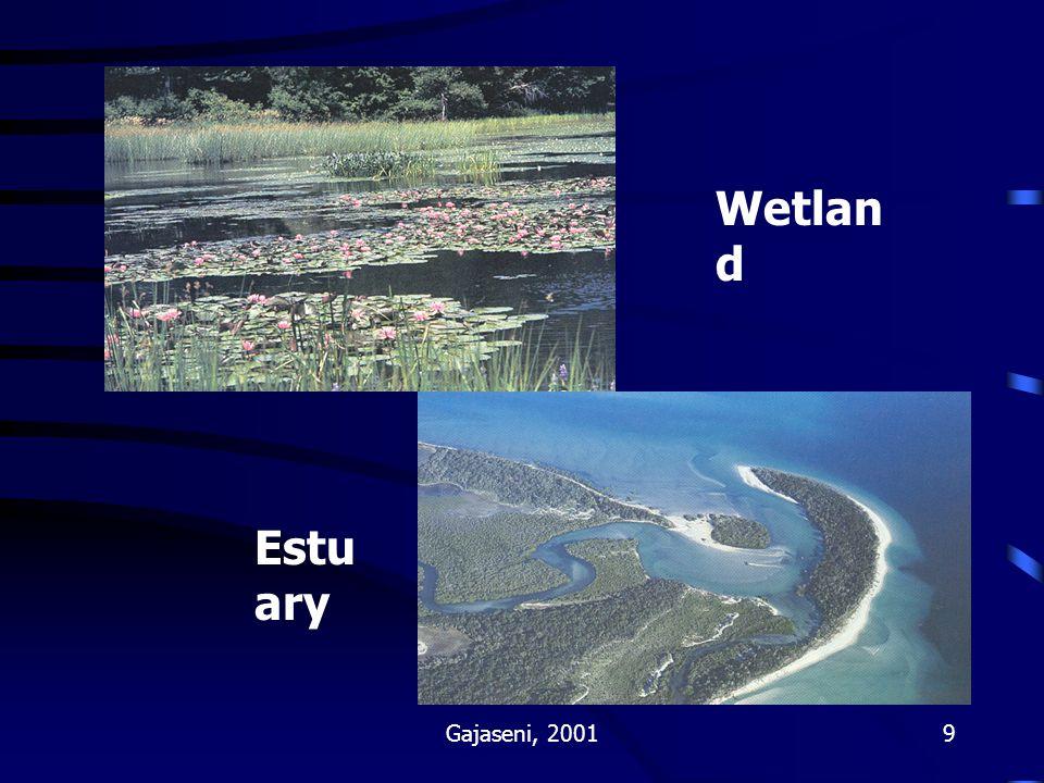 Wetland Estuary Gajaseni, 2001