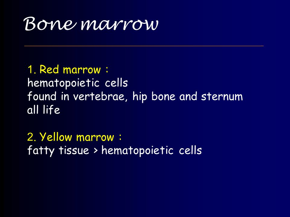 Bone marrow 1. Red marrow : hematopoietic cells