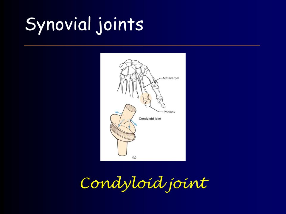 Synovial joints Condyloid joint