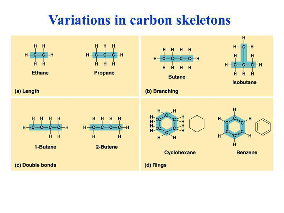 Variations in carbon skeletons