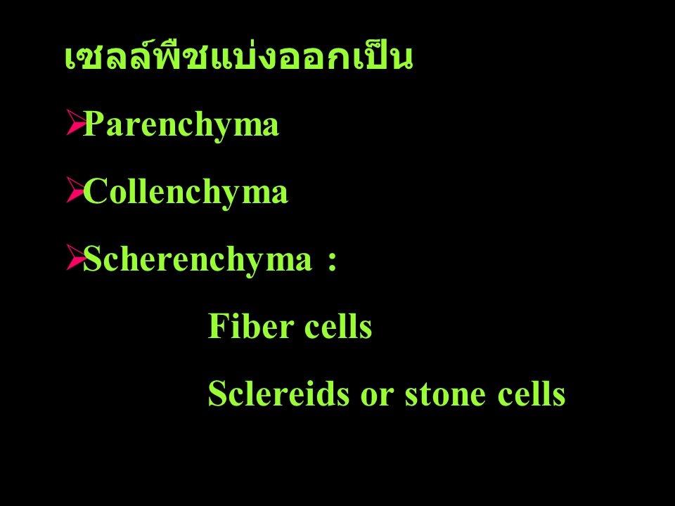 เซลล์พืชแบ่งออกเป็น Parenchyma Collenchyma Scherenchyma : Fiber cells Sclereids or stone cells