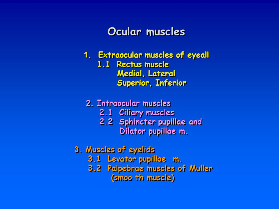 Ocular muscles 1. Extraocular muscles of eyeall 1.1 Rectus muscle