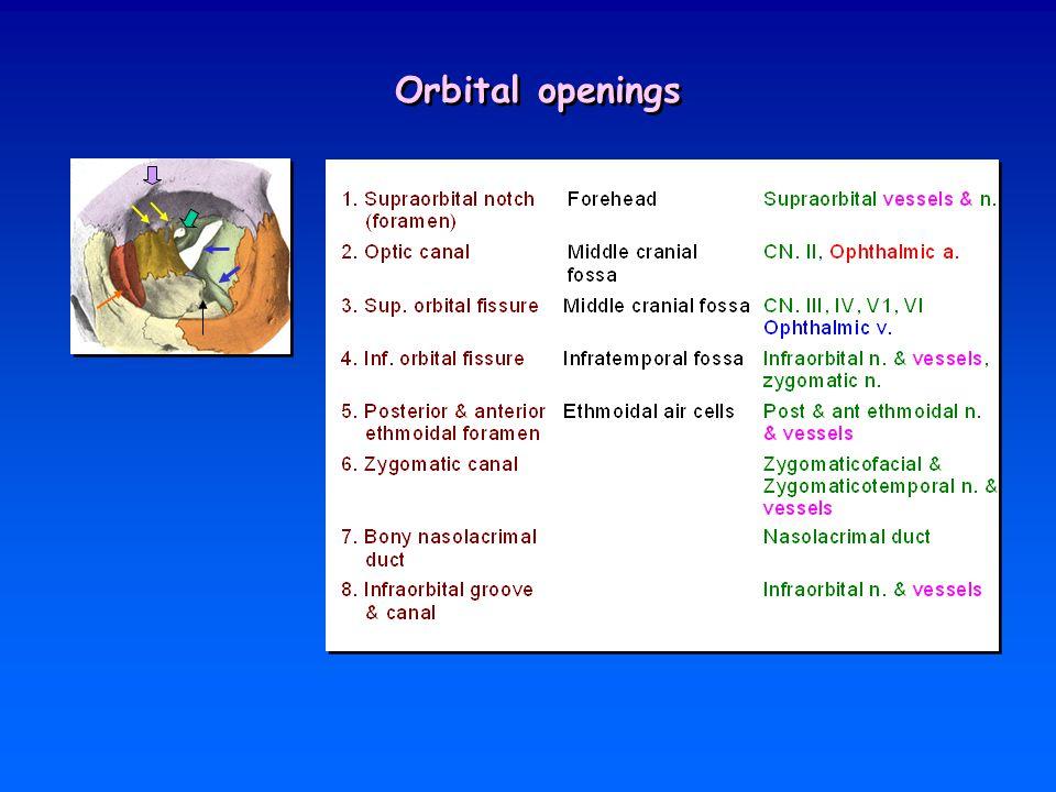 Orbital openings