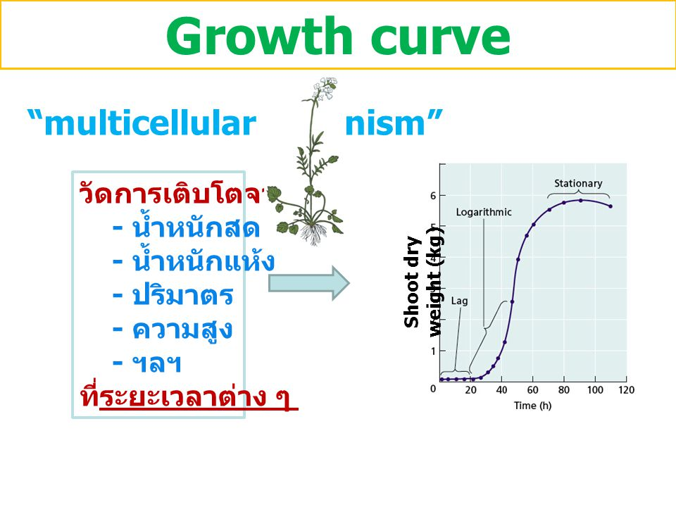 Growth curve multicellular organism วัดการเติบโตจาก - น้ำหนักสด