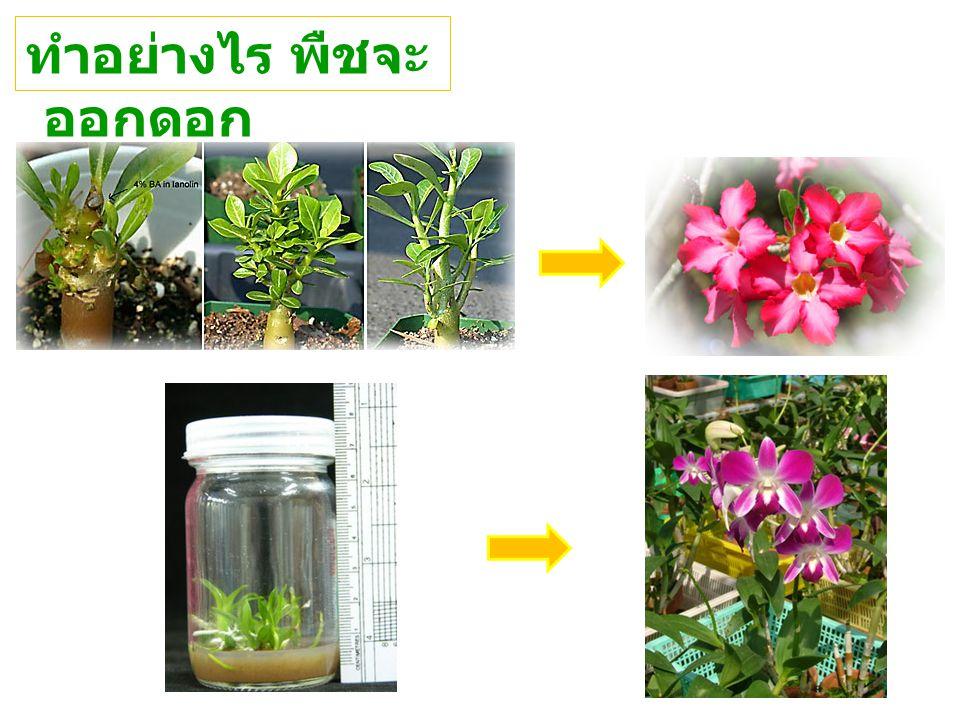 ทำอย่างไร พืชจะออกดอก