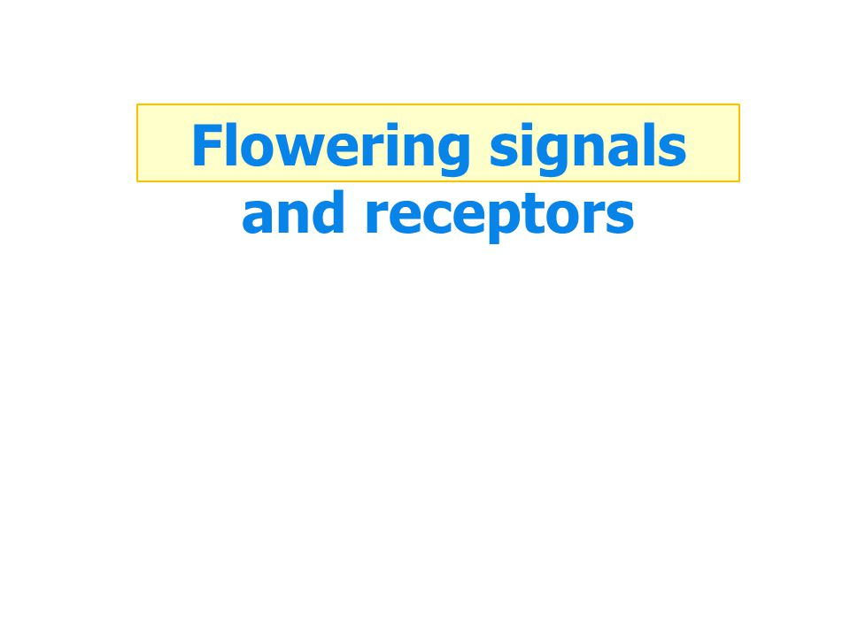 Flowering signals and receptors