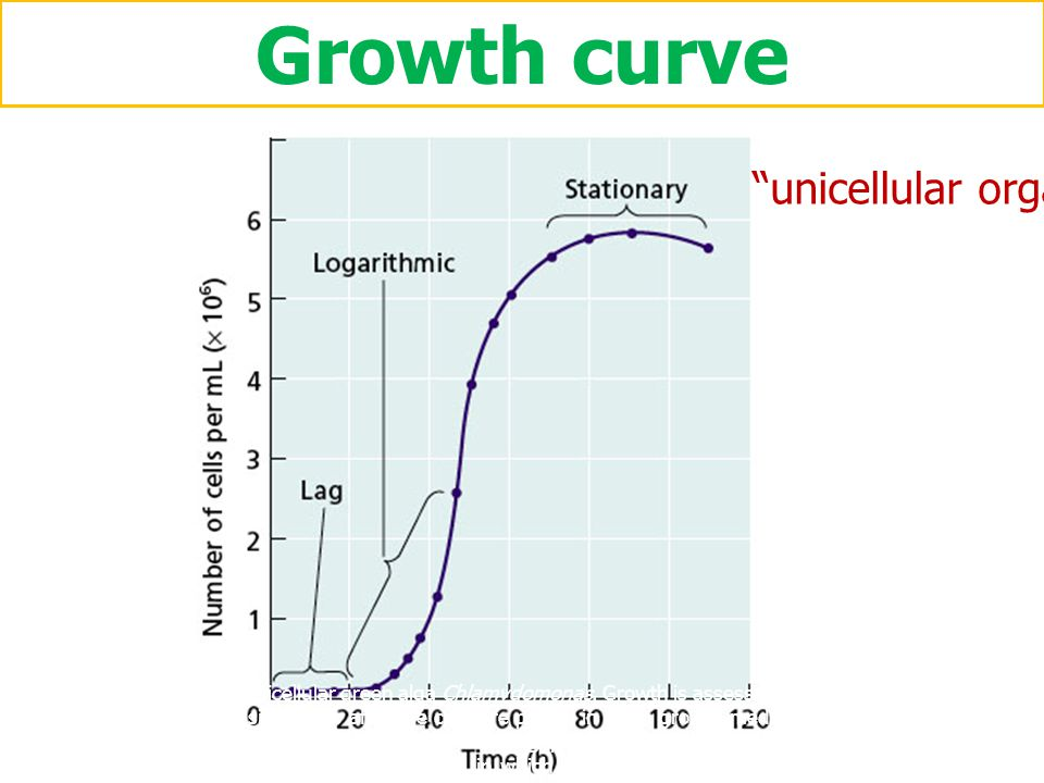 Growth curve unicellular organism