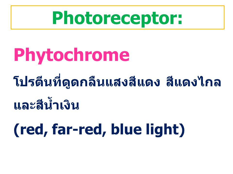 Photoreceptor: Phytochrome (red, far-red, blue light)