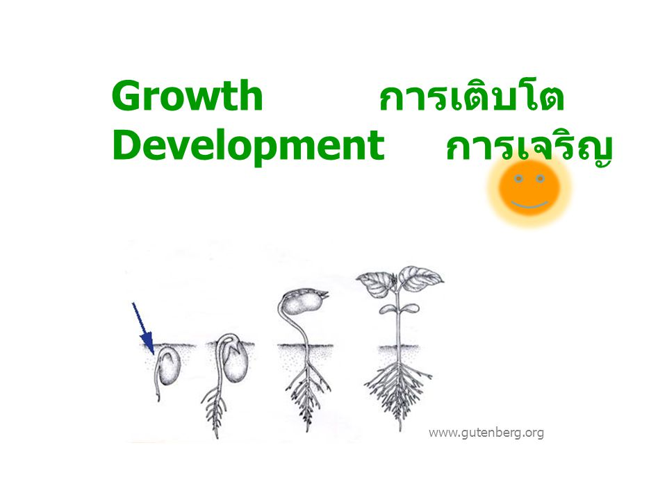 Growth การเติบโต Development การเจริญ