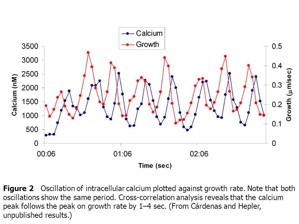 ตัวอย่างการเติบโตแบบ tip growth ที่มี การงอกของ pollen tube เป็นโมเดลในการศึกษา