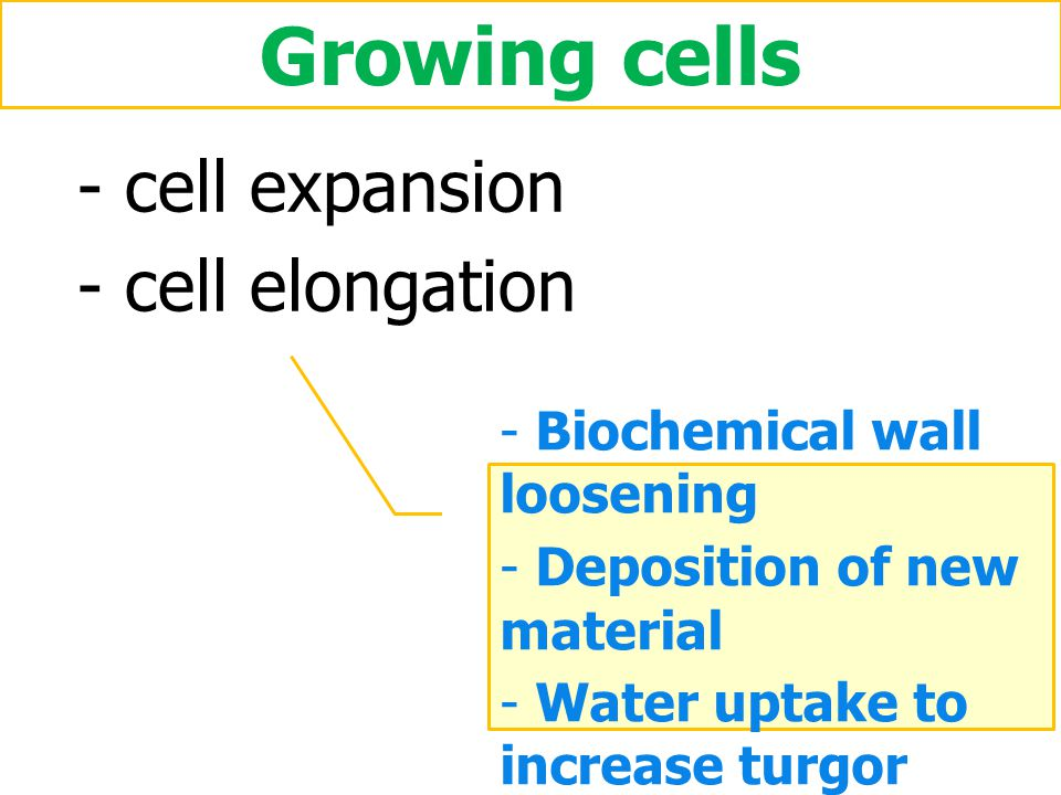 Growing cells cell expansion cell elongation