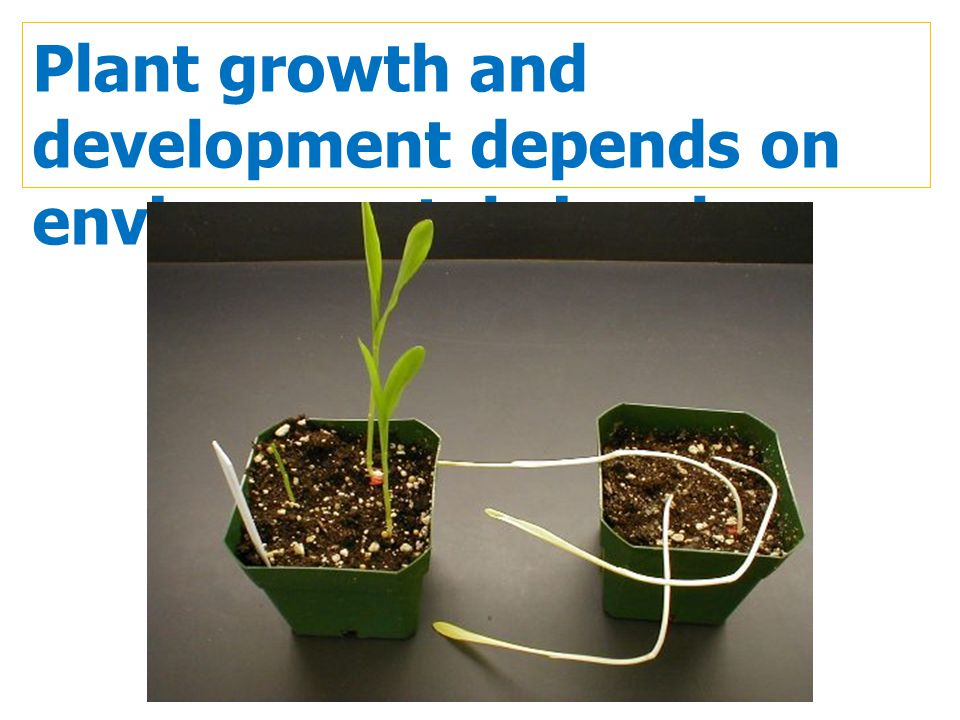 Plant growth and development depends on environmental signals