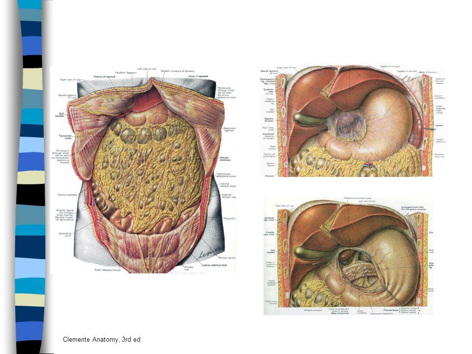 Clemente Anatomy, 3rd ed