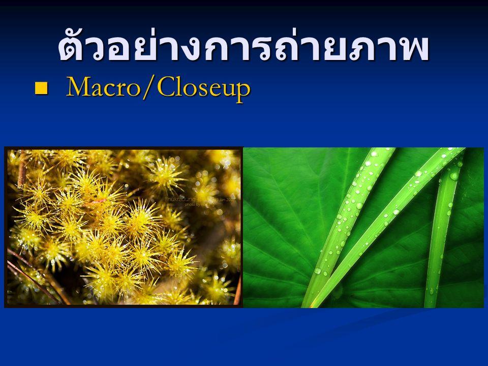 ตัวอย่างการถ่ายภาพ Macro/Closeup