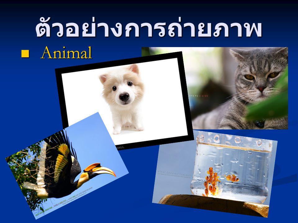 ตัวอย่างการถ่ายภาพ Animal