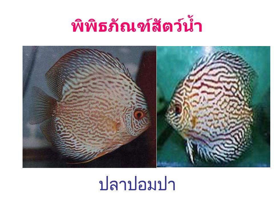 พิพิธภัณฑ์สัตว์น้ำ ปลาปอมปา